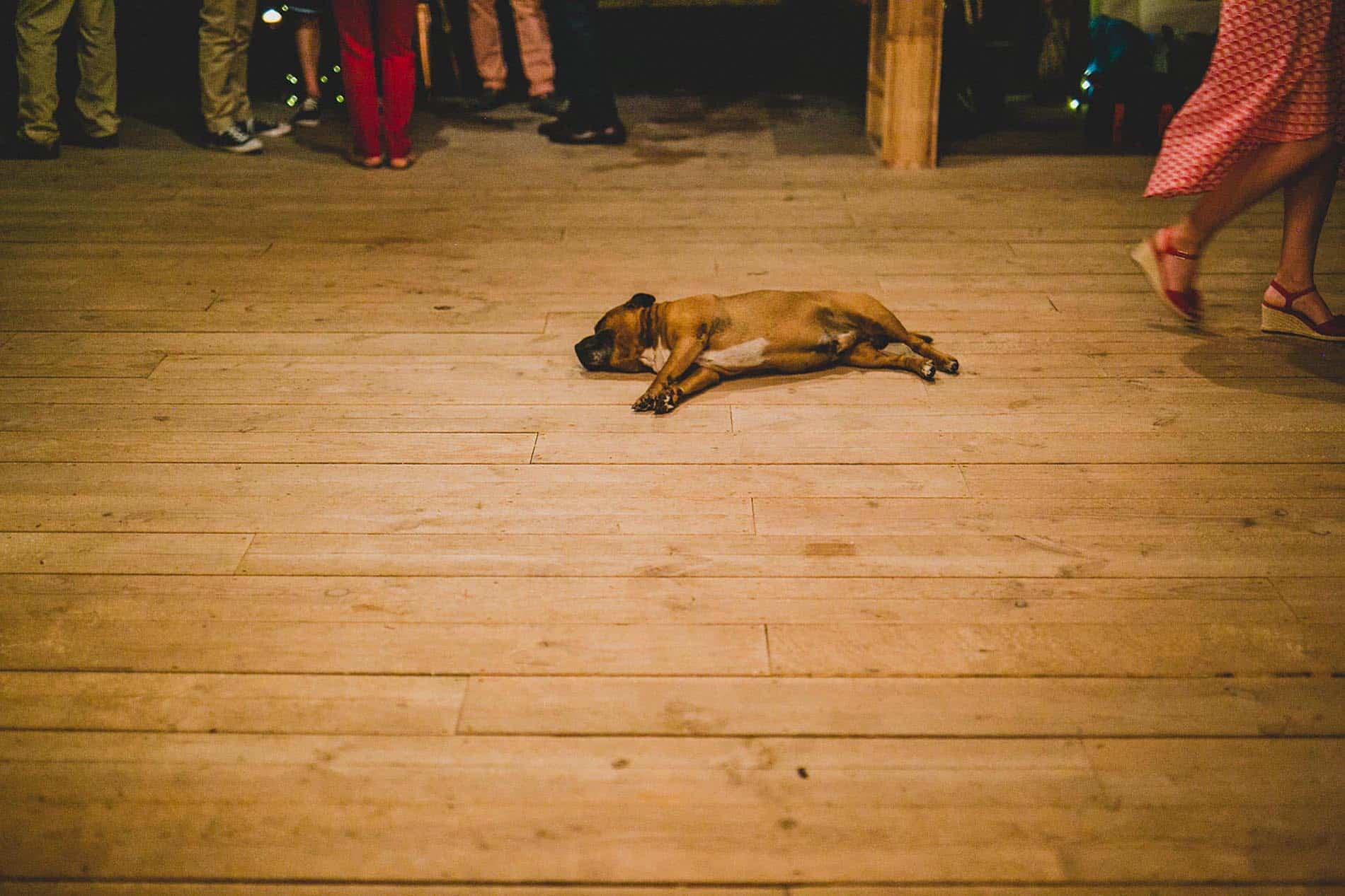 dog in the middle of the dance floor
